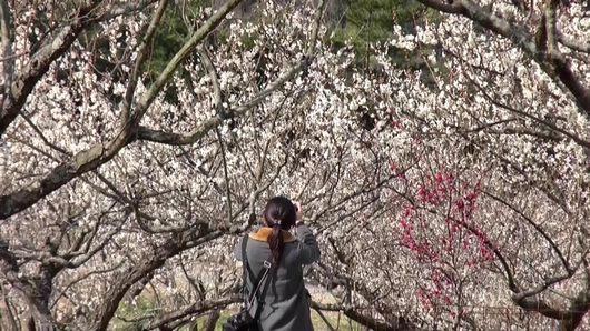 梅が満開で、私にも春がきた